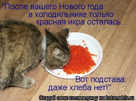 """Котоматрица: """"После вашего Нового года в холодильнике только красная икра осталась... Вот подстава: даже хлеба нет!"""""""
