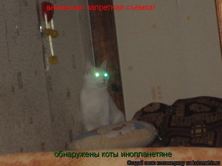 Котоматрица: внимание! запретная съёмка! обнаружены коты инопланетяне