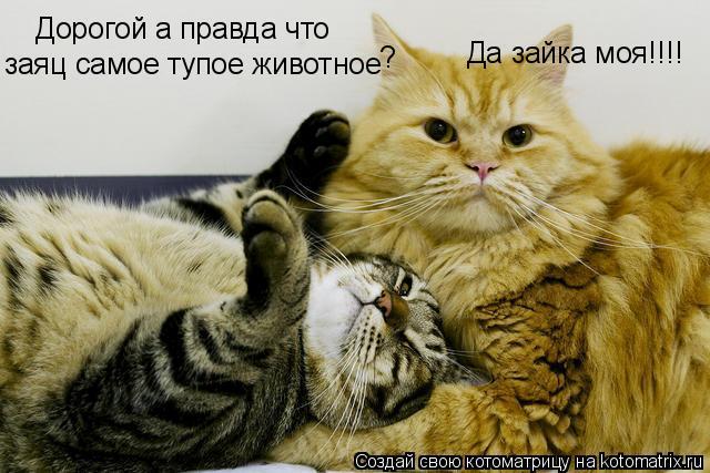 Котоматрица: Дорогой а правда что заяц самое тупое животное ? Да зайка моя!!!!