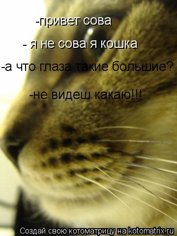 Котоматрица: -привет сова - я не сова я кошка -а что глаза такие большие? -не видеш какаю!!!