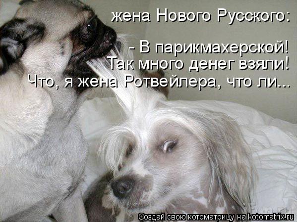 Котоматрица: жена Нового Русского:  - В парикмахерской!  Так много денег взяли!  Что, я жена Ротвейлера, что ли...
