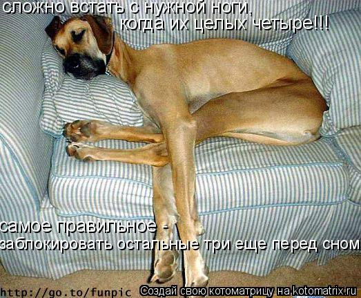 Котоматрица: сложно встать с нужной ноги, когда их целых четыре!!! самое правильное -  заблокировать остальные три еще перед сном