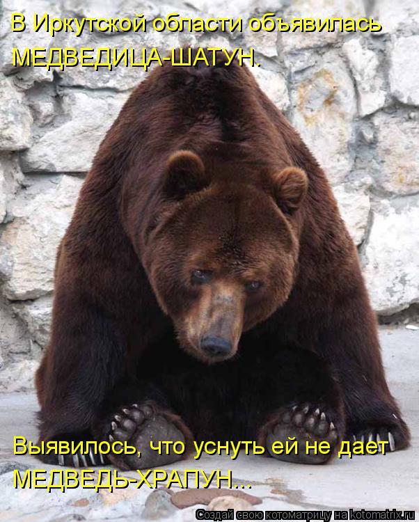 Котоматрица: В Иркутской области объявилась МЕДВЕДИЦА-ШАТУН. Выявилось, что уснуть ей не дает МЕДВЕДЬ-ХРАПУН...