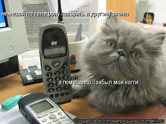 Котоматрица: немешай по телефону говорить я другону звоню немешай по телефону говорить я другону звоню а помешаеш !!забыл мои когти