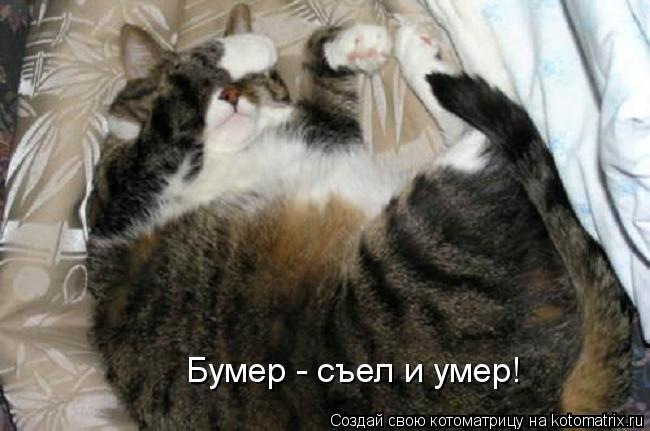 Котоматрица: Бумер - съел и умер!