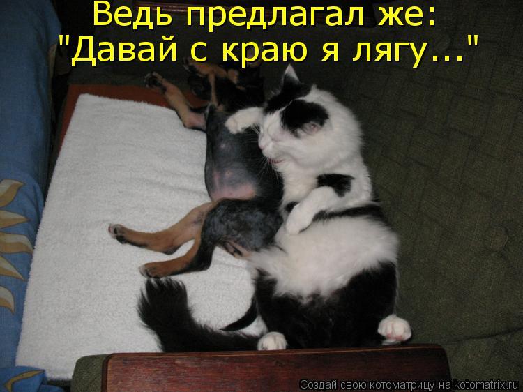 "Котоматрица: Ведь предлагал же: ""Давай с краю я лягу..."""