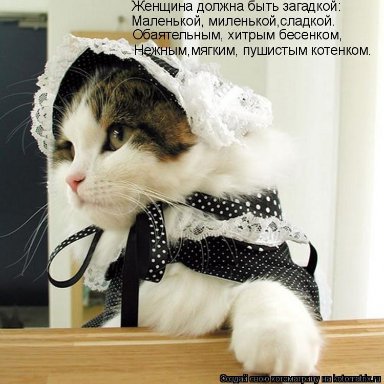 Котоматрица: Нежным,мягким, пушистым котенком. Женщина должна быть загадкой:  Маленькой, миленькой,сладкой.  Обаятельным, хитрым бесенком,