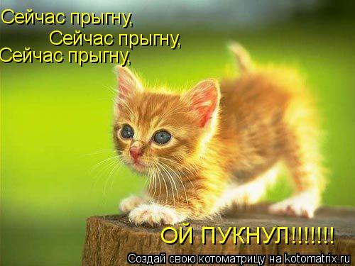Котоматрица: Сейчас прыгну,  Сейчас прыгну,  Сейчас прыгну,  ОЙ ПУКНУЛ!!!!!!!
