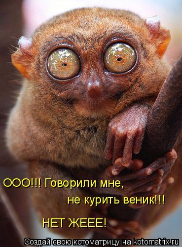 Котоматрица: ООО!!! Говорили мне,  не курить веник!!! НЕТ ЖЕЕЕ!