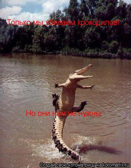 Котоматрица: Только мы убиваем крокодилов! Но они нам не нужны