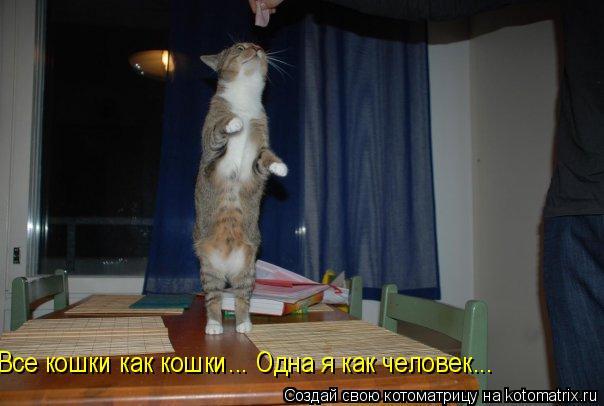 Котоматрица: Все кошки как кошки... Одна я как человек...
