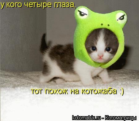 Котоматрица: у кого четыре глаза, тот похож на котожаба :)