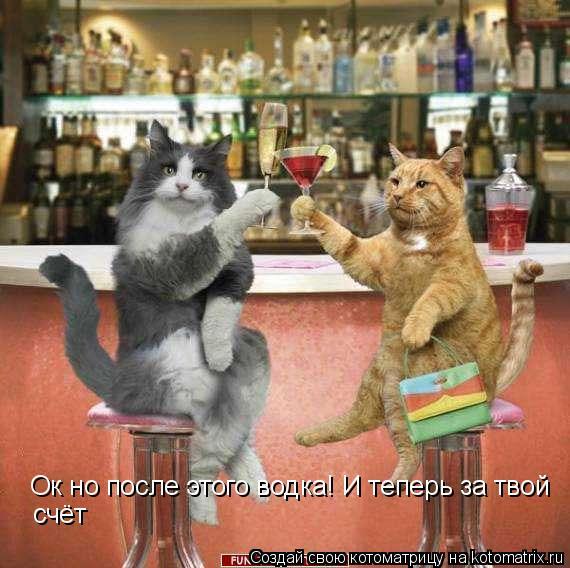 Котоматрица: Ок но после этого водка! И теперь за твой  счёт