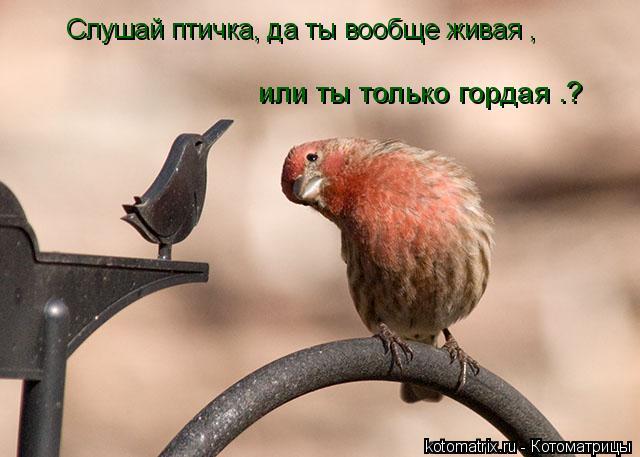 Котоматрица: Слушай птичка, да ты вообще живая , или ты только гордая .?