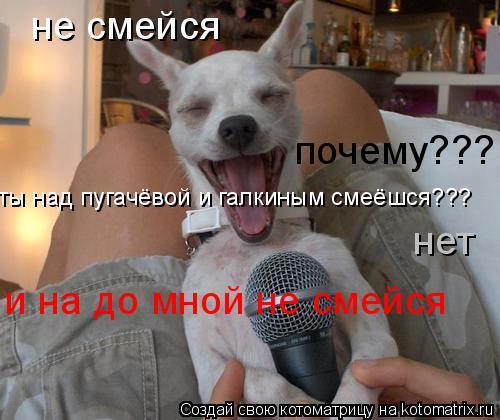 Котоматрица: не смейся почему??? ты над пугачёвой и галкиным смеёшся??? нет и на до мной не смейся