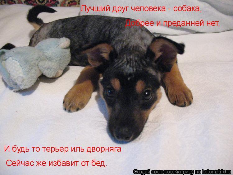 Котоматрица: Лучший друг человека - собака,  Добрее и преданней нет.    Сейчас же избавит от бед.  И будь то терьер иль дворняга