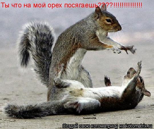 Котоматрица: Ты что на мой орех посягаешь????!!!!!!!!!!!!!!