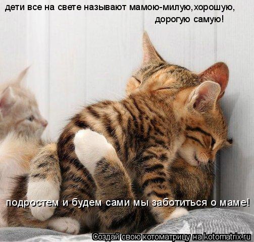 Котоматрица: дети все на свете называют мамою-милую,хорошую, дорогую самую! подростем и будем сами мы заботиться о маме!