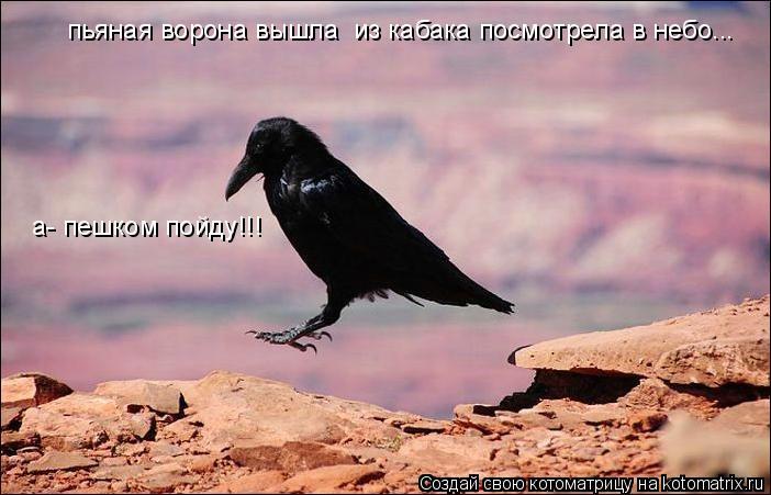 Котоматрица: пьяная ворона вышла  из кабака посмотрела в небо... а- пешком пойду!!!
