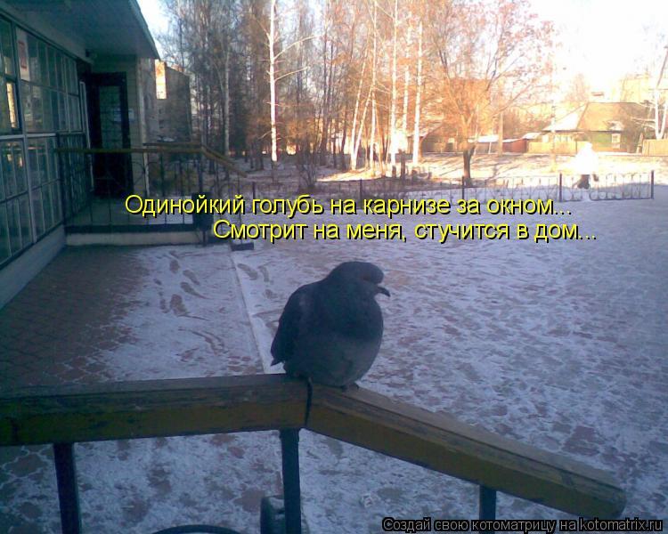 Котоматрица: Одинойкий голубь на карнизе за окном... Смотрит на меня, стучится в дом...