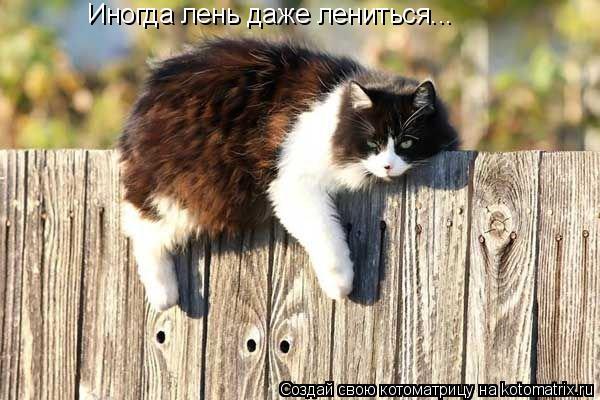 Котоматрица: Иногда лень даже лениться...