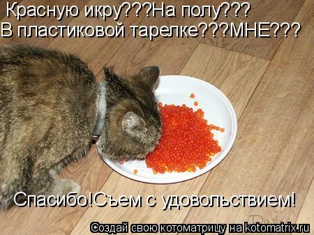 Котоматрица: Красную икру???На полу??? В пластиковой тарелке???МНЕ??? Спасибо!Съем с удовольствием!