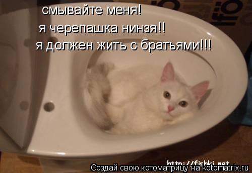 Котоматрица: смывайте меня! я черепашка нинзя!! я должен жить с братьями!!!