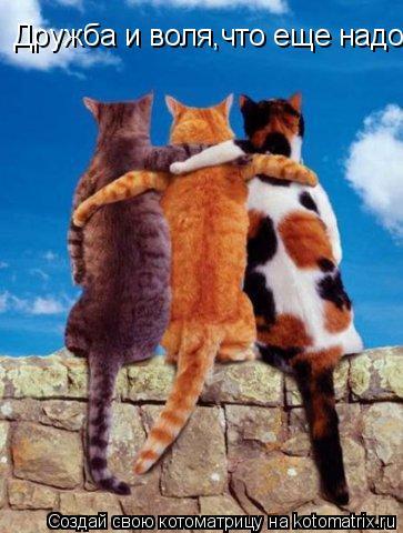 Котоматрица: Дружба и воля,что еще надо?