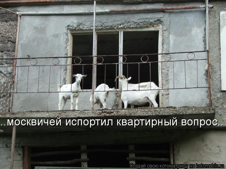 Котоматрица: ..москвичей испортил квартирный вопрос..
