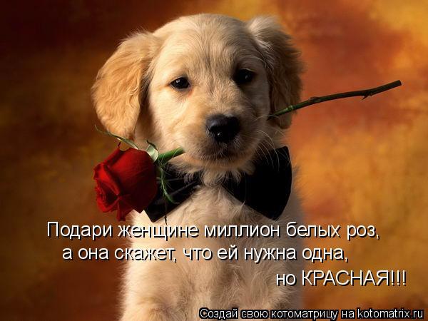 Котоматрица: Подари женщине миллион белых роз,  но КРАСНАЯ!!! а она скажет, что ей нужна одна,