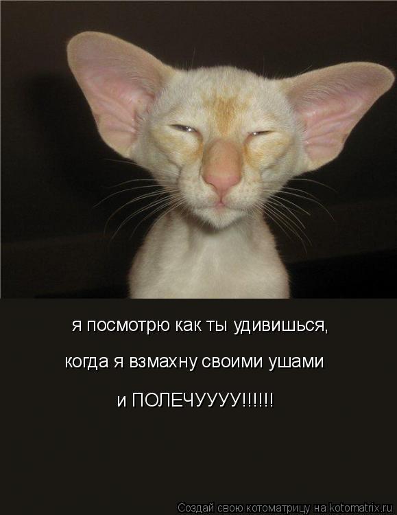 Котоматрица: я посмотрю как ты удивишься, когда я взмахну своими ушами и ПОЛЕЧУУУУ!!!!!!