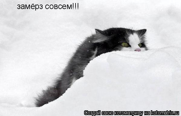 Котоматрица: замёрз совсем!!!
