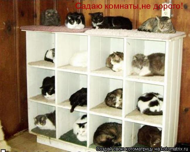 Котоматрица: Садаю комнаты,не дорого!