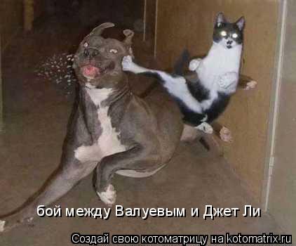Котоматрица: бой между Валуевым и Джет Ли бой между Валуевым и Джет Ли