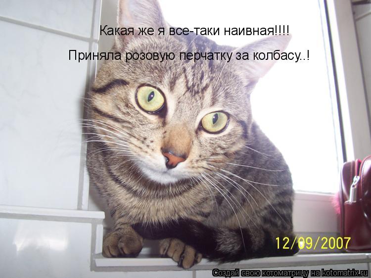 Котоматрица: Какая же я все-таки наивная!!!! Приняла розовую перчатку за колбасу..!