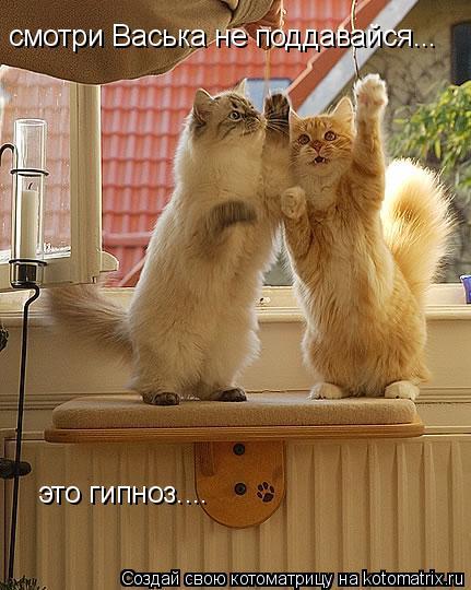 Котоматрица: смотри Васька не поддавайся...  это гипноз....