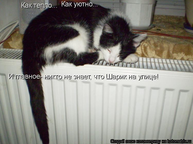 Котоматрица: Как тепло... Как уютно... И главное- никто не знает, что Шарик на улице!