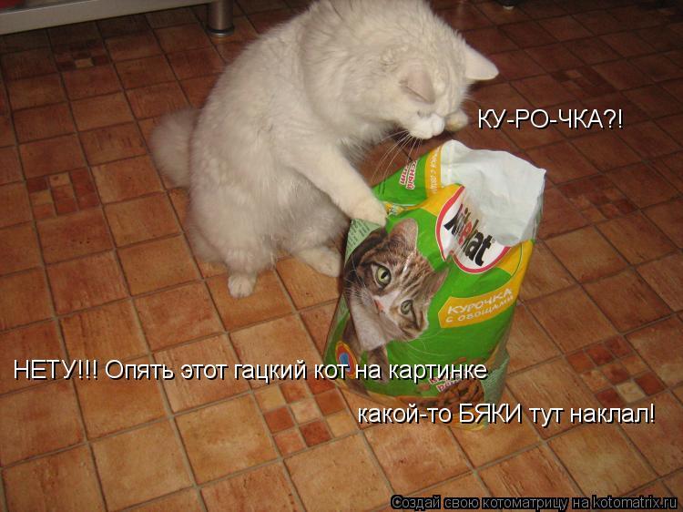 Котоматрица: КУ-РО-ЧКА?!  НЕТУ!!! Опять этот гацкий кот на картинке  какой-то БЯКИ тут наклал!