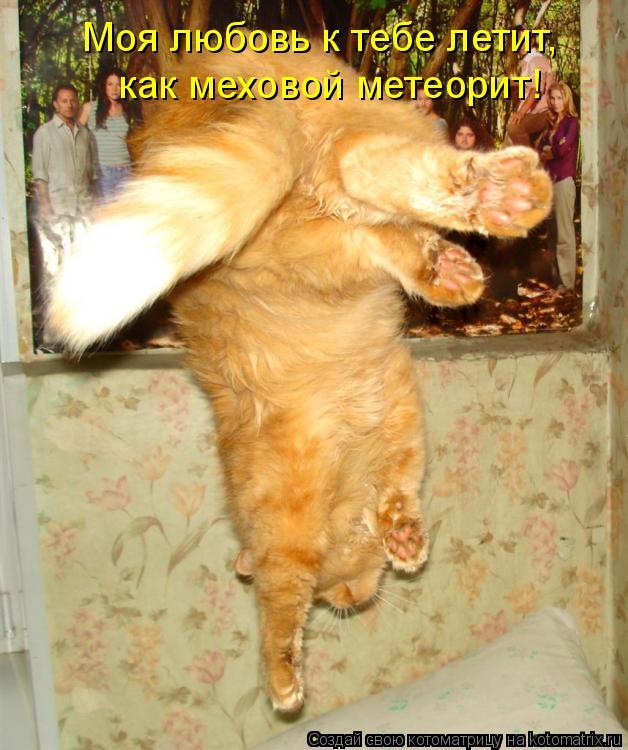 Котоматрица: Моя любовь к тебе летит, как меховой метеорит!