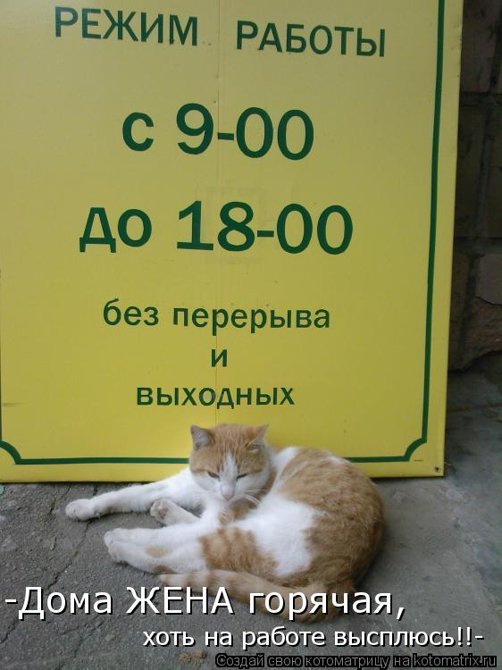 Котоматрица: -Дома ЖЕНА горячая,  хоть на работе высплюсь!!-