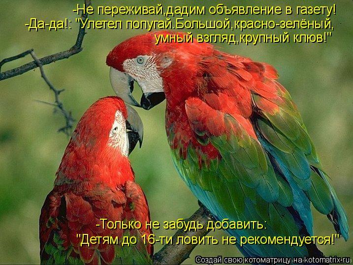 """Котоматрица: -Не переживай,дадим объявление в газету! -Да-да!: """"Улетел попугай.Большой,красно-зелёный, умный взгляд,крупный клюв!"""" """"Детям до 16-ти ловить не р"""