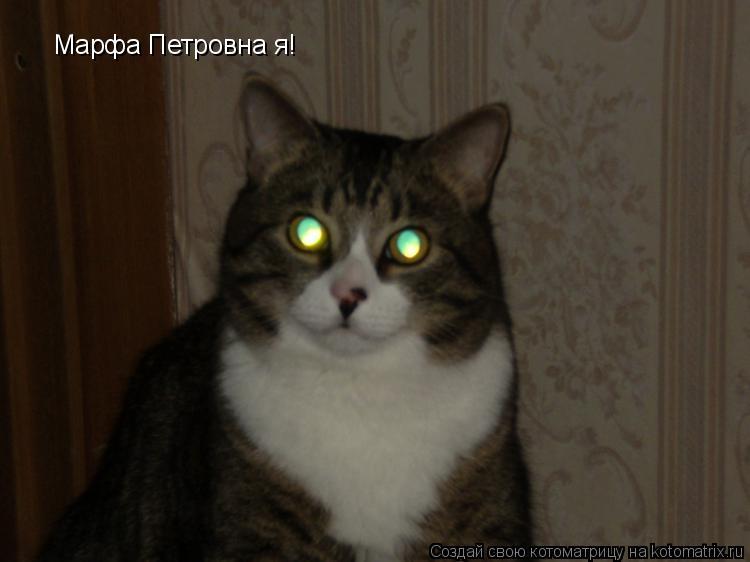Котоматрица: Марфа Петровна я!