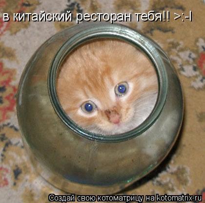 Котоматрица: в китайский ресторан тебя!! >:-l