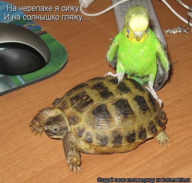 Котоматрица: На черепахе я сижу.... И на солнышко гляжу....