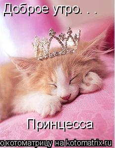Котоматрица: Доброе утро. . . Принцесса