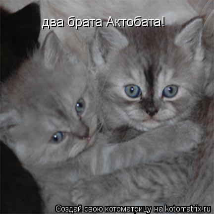 Котоматрица: два брата Актобата!