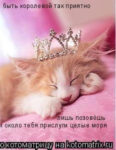 Котоматрица: быть королевой так приятно лишь позовёшь  и около тебя прислуги целые моря