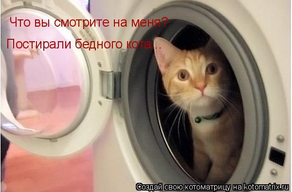 Котоматрица: Что вы смотрите на меня?  Постирали бедного кота...