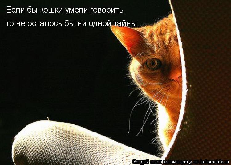Котоматрица: Если бы кошки умели говорить,  то не осталось бы ни одной тайны...