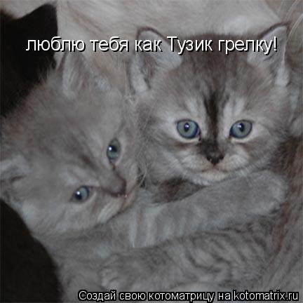 Котоматрица: люблю тебя как Тузик грелку!